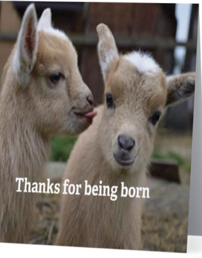 Annies Card #013 - Thanks For Being Born, Goats