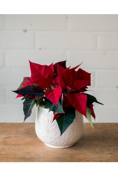 "Poinsettia - 4.5"" - Francis Planter"