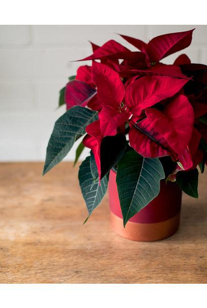Poinsettia - Rose Gold Planter
