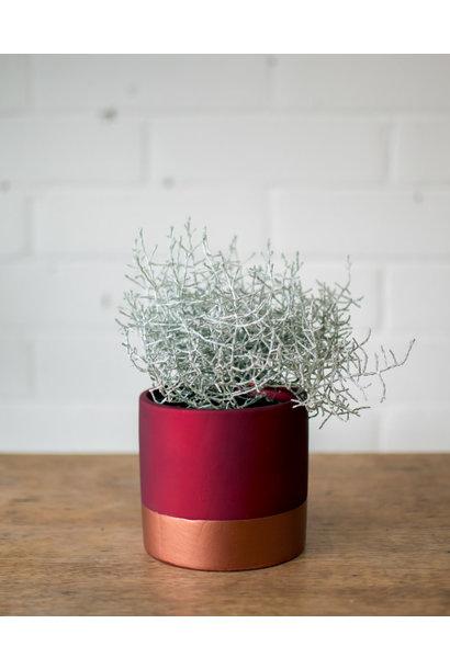 Silver Bush - Rose Gold Planter