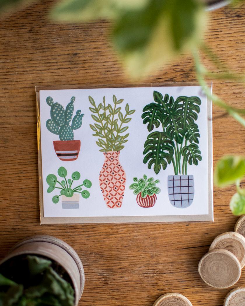 Wildberry - Fleurifik Foliage - Plantes-1