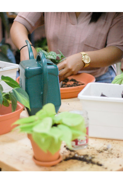 Repotting party - April 19