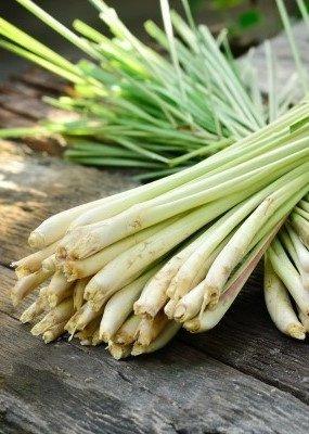 Zayat Aroma Essential Oil - Lemongrass