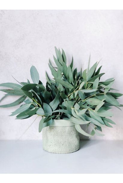 Huile Essentielle - Eucalyptus Biologique