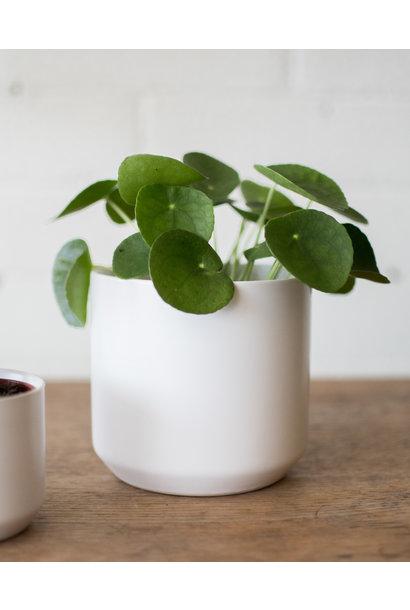 """Kendall Pot - White - 4.75"""""""