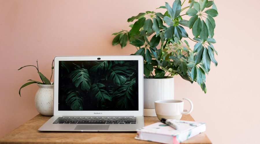 The Benefits of Plants in the Home (and in Your Home Office)