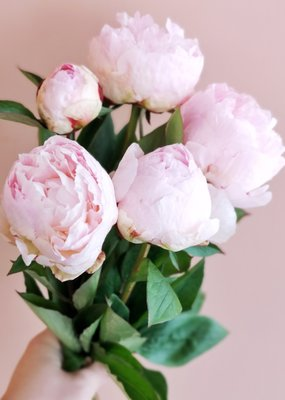 Nothing but Peonies - Mini  Bouquet - PREORDER