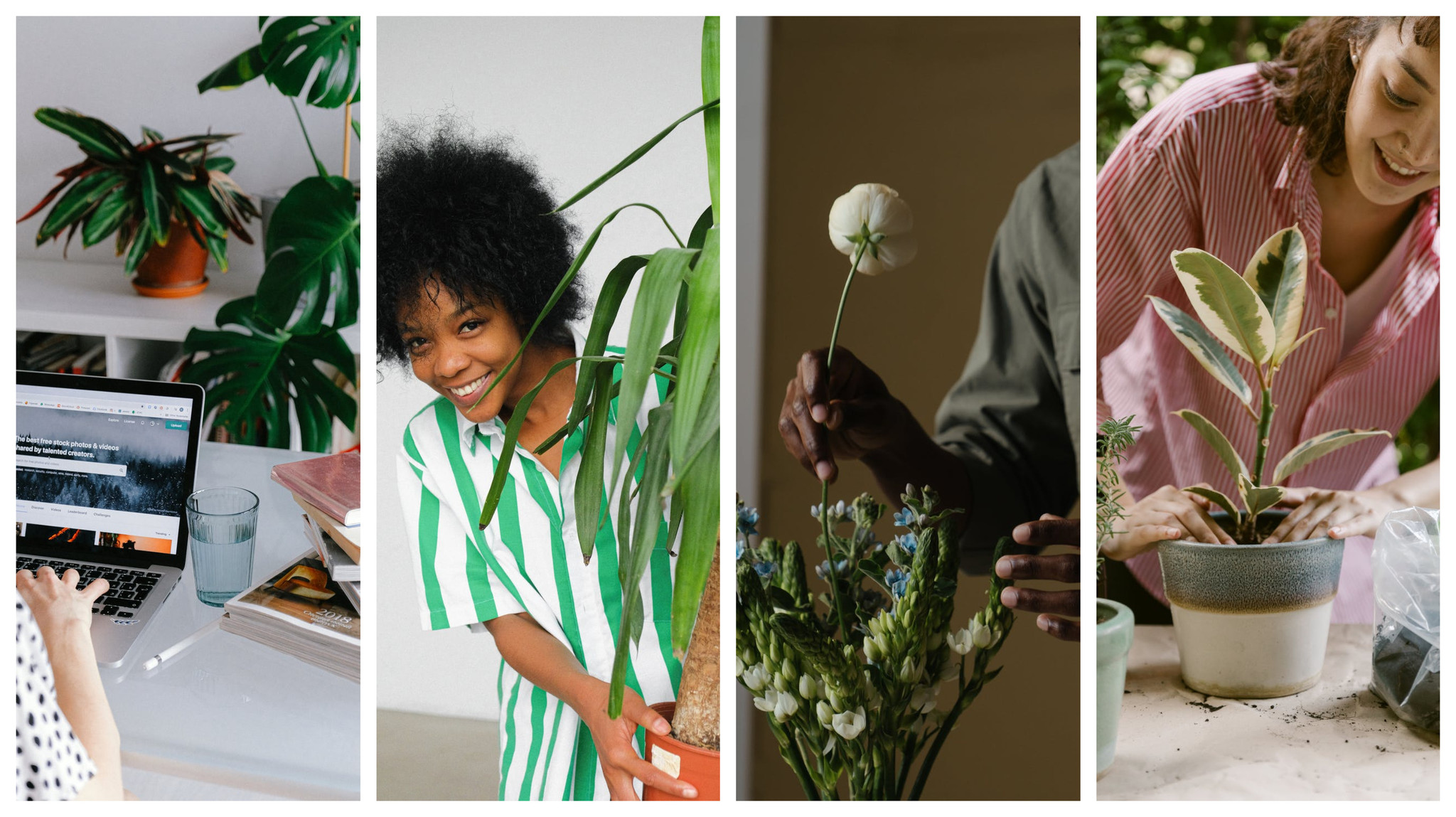 7 Ways House Plants and Flowers Improve Mental Well-Being