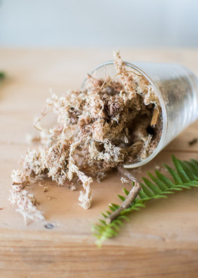 Potting Mix - Sphagnum Moss