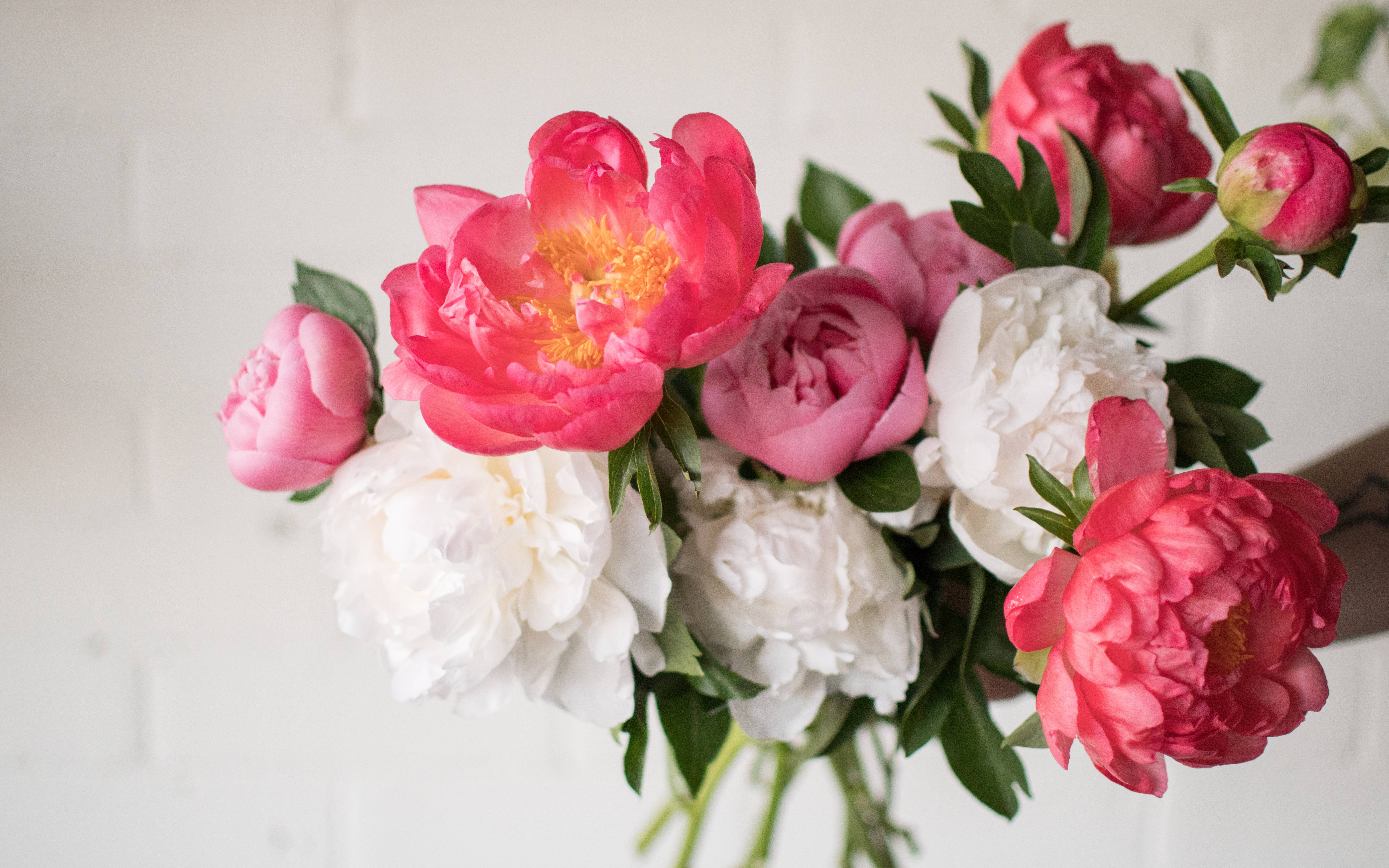 Peonies for you, Peonies for me!