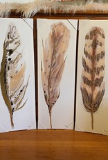 Wink Feather Canvas Set of 3