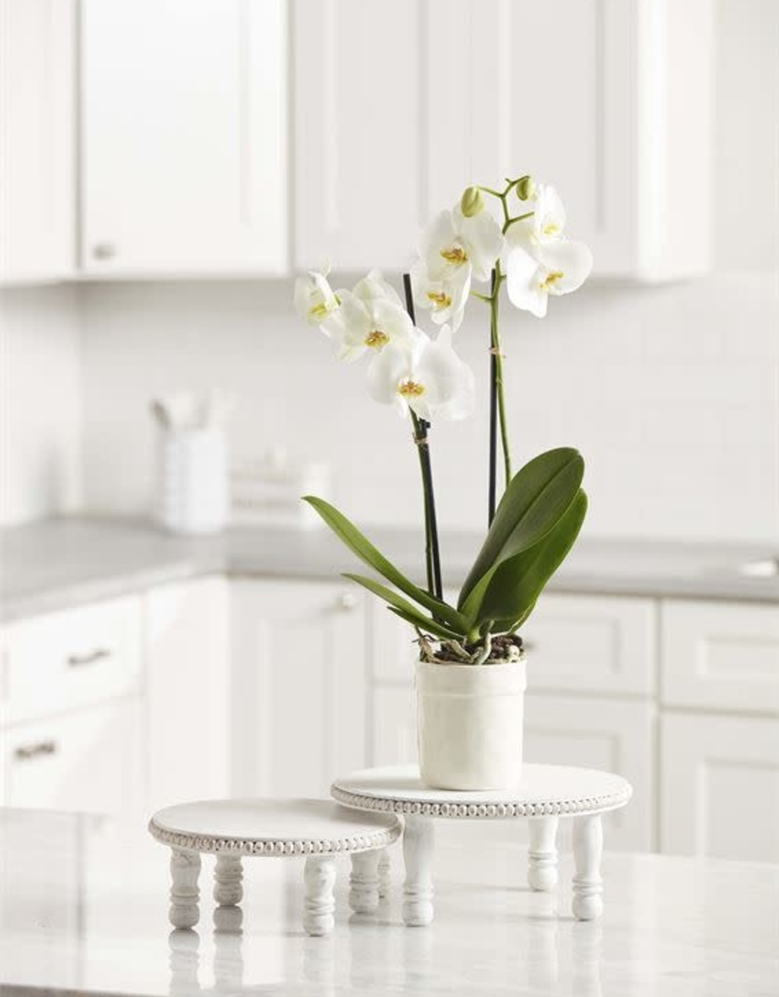 Wink White Wash Beaded Pedestal-Small