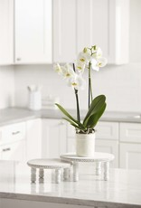 Wink White Wash Beaded Pedestal-Large