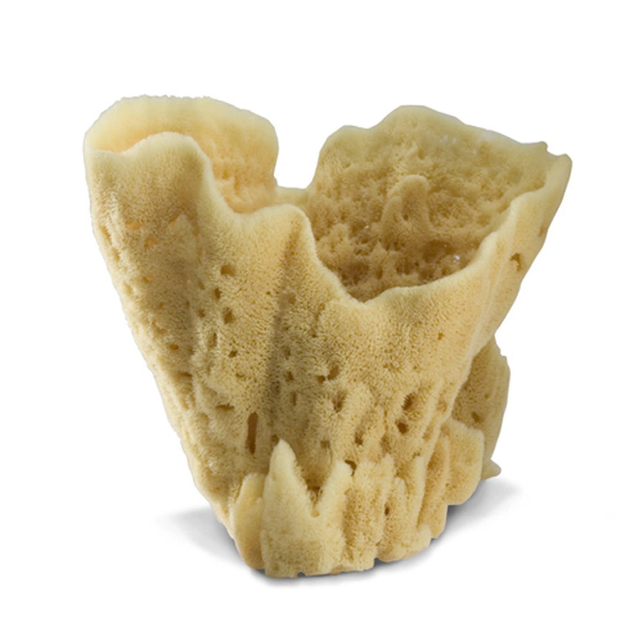 sponge colossal vase-1