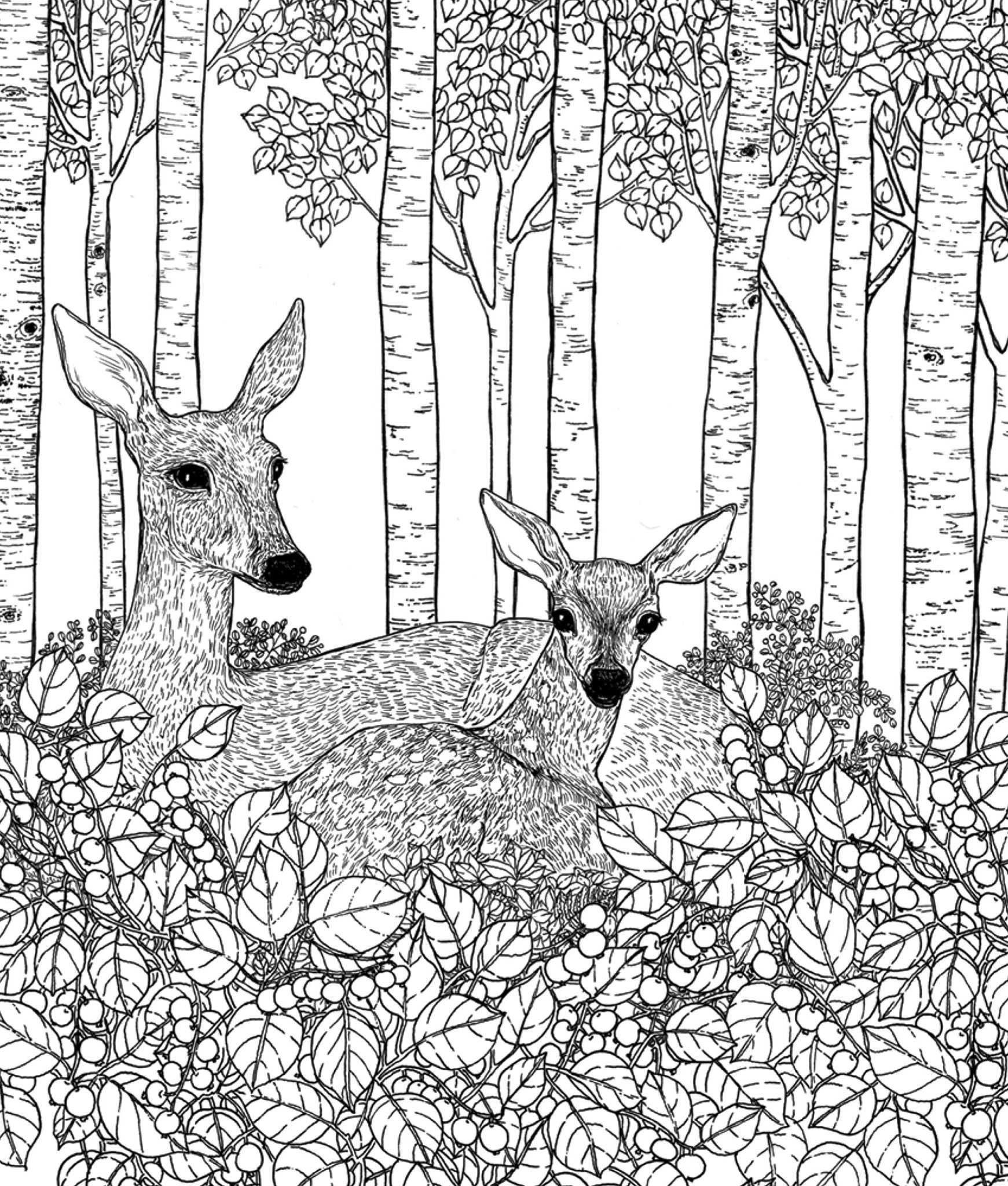 Drawn to Color- A Pacific Northwest Coloring Book