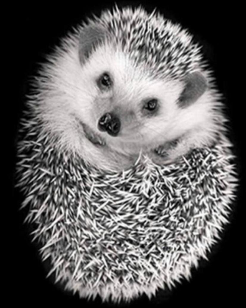 Cute Hedgehog DIY Dot Painting