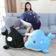 Black Killer Whale Plush