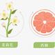 Nong Fu Nong Fu Grapefruit Green Tea 500ml