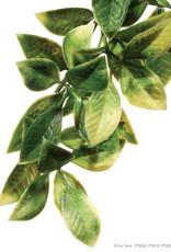 """Hagen - Exo Terra Hagen Exo Terra Plastic Terrarium Plant, Medium, """"Mandarin"""