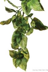 """Hagen - Exo Terra Hagen Exo Terra Plastic Terrarium Plant, Medium, """"Amapallo"""