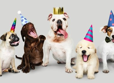 Happy Birthday for PUP!