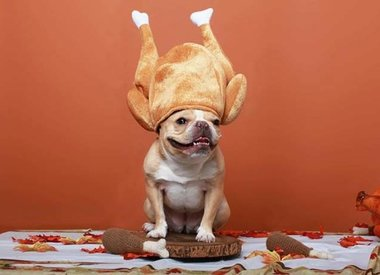 Thanksgiving 4 Your Dog