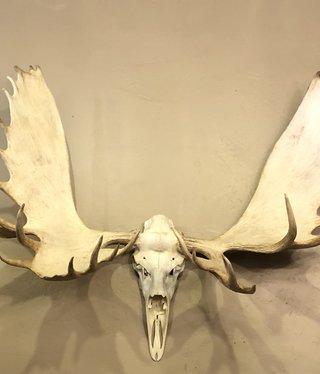 Fish X-Large White Moose European