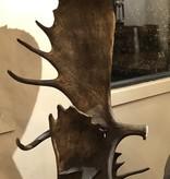 Fish Moose Antler Floor Lamp