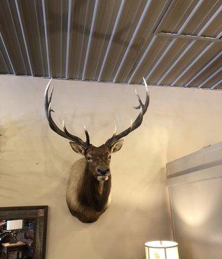 Fish Elk Shoulder Mount