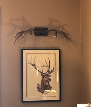 Fish Picture 2 Downlight Sconce