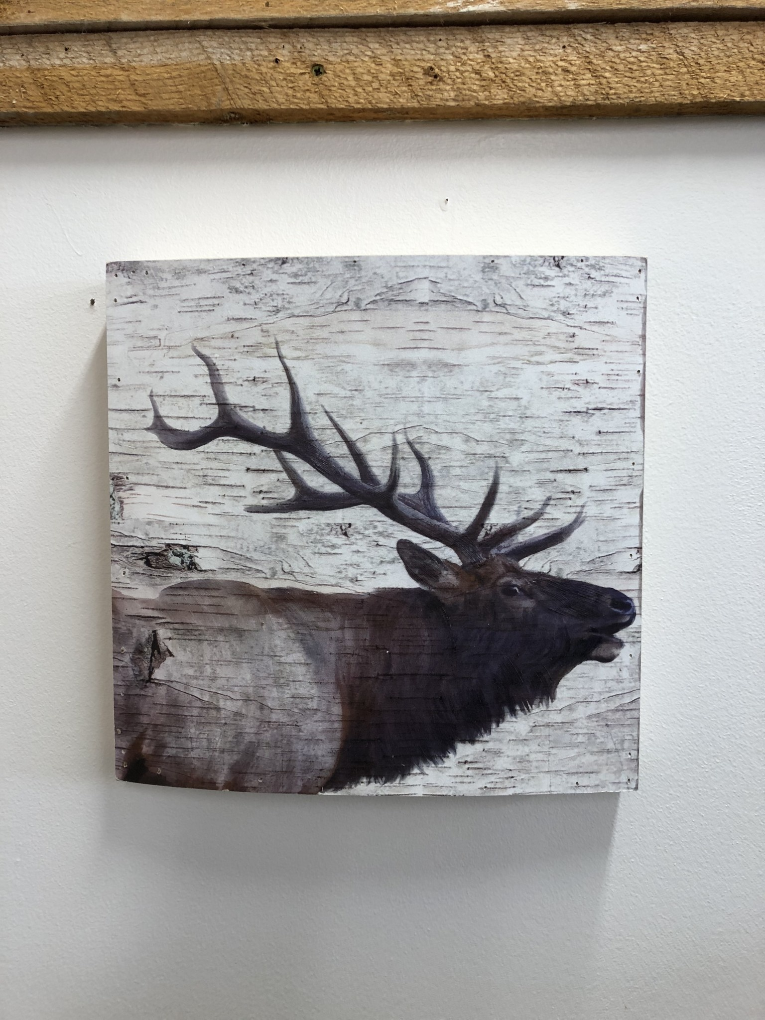 Simpkins-Canterbury Lane Elk Wall Art