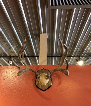 Fish Mule Deer Rack on Plaque