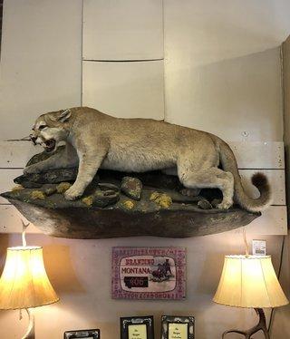 """Fish """"Kriscat"""" Lion Mount"""