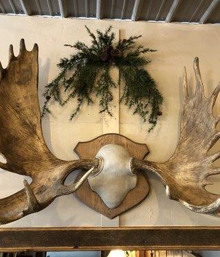 BIG BEAR Moose Rack on Plaque