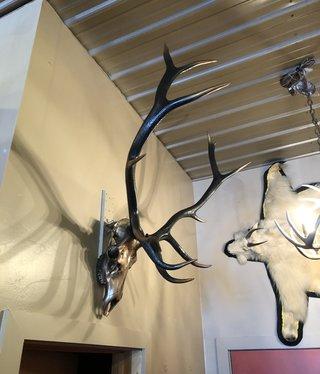 Fish Elk Skull - Bronze & Black