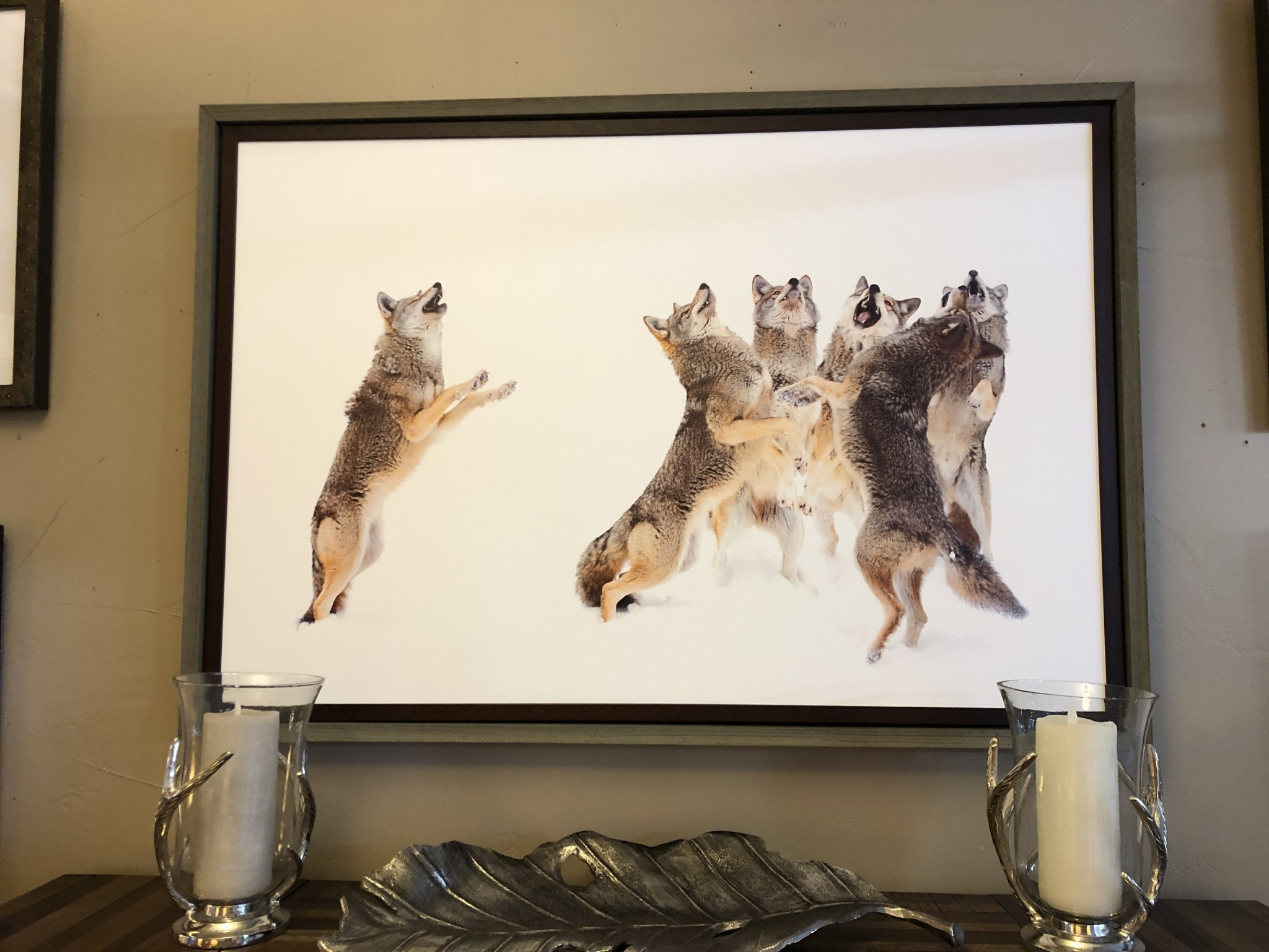 TAC The Choir Coyotes