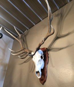 BIG BEAR Elk Skull on Plaque