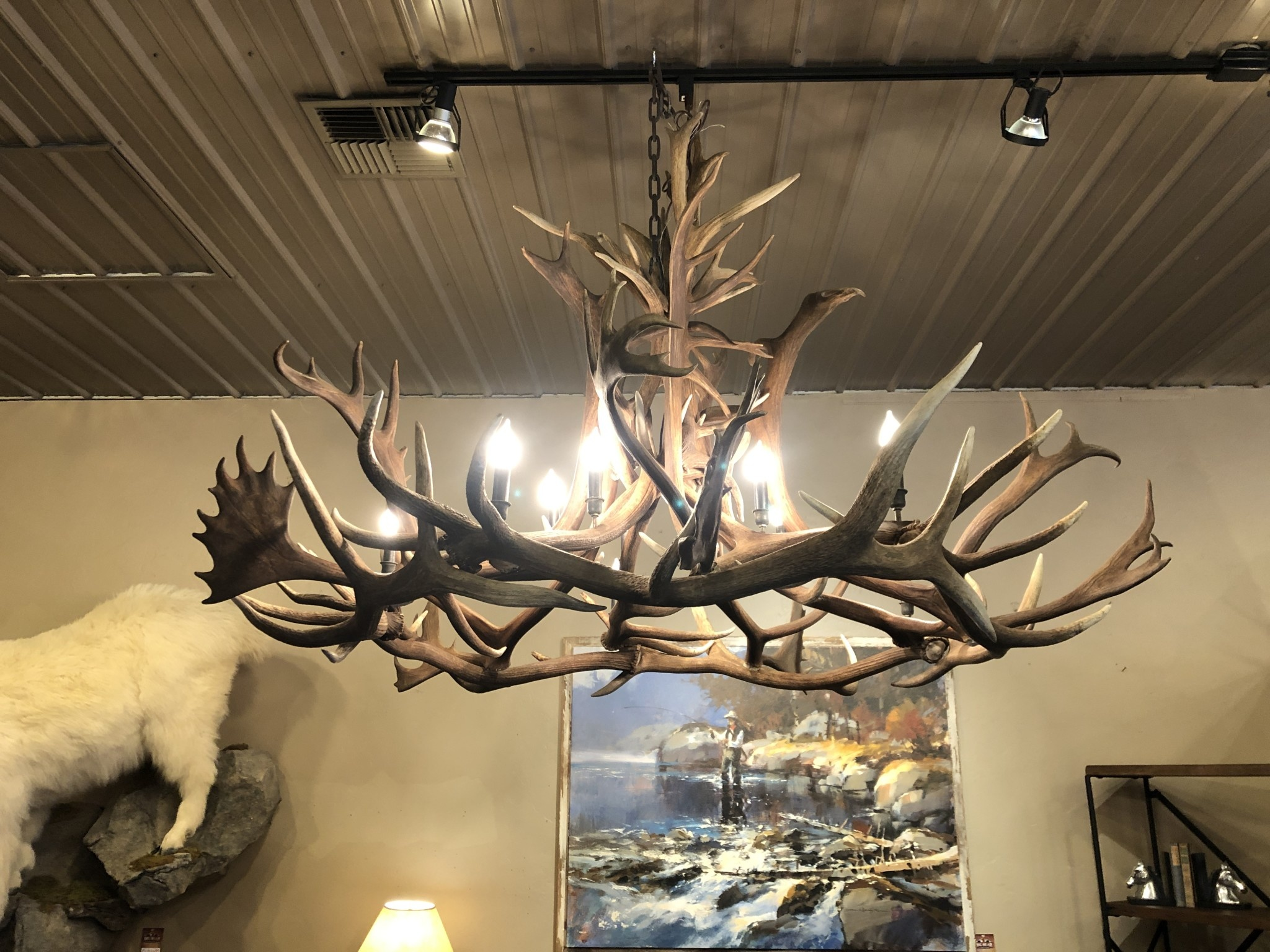 Fish Elk / BOU Chandelier with 10 Lights