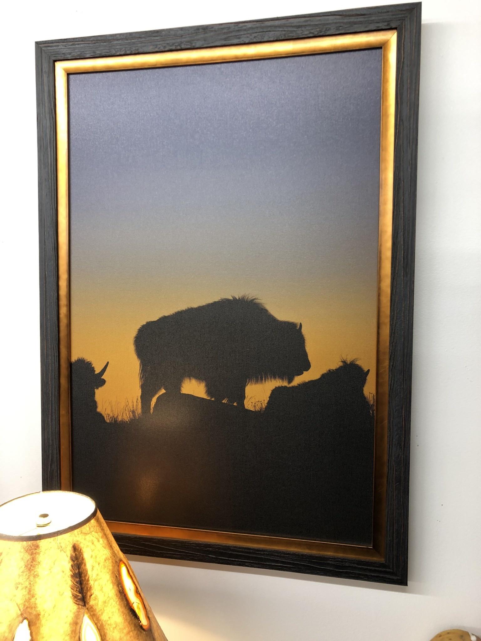 TAC Yellowstone Bison