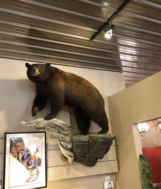 Fish Montana Black Bear Mount