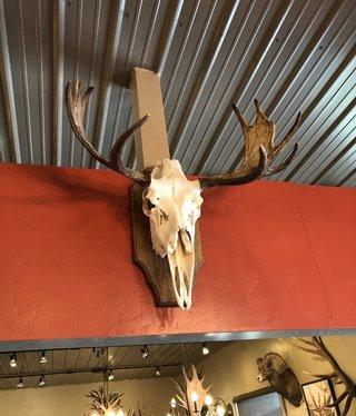 Fish Sm Moose Rack/Plaque
