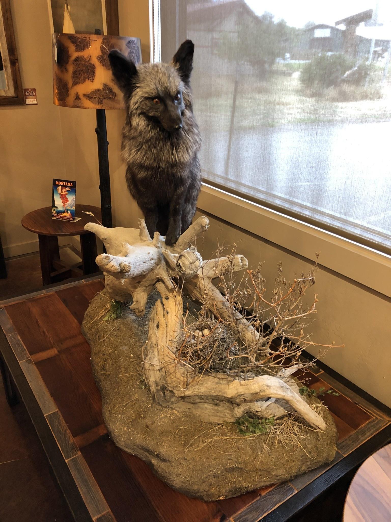 Cedar Hill Taxidermy Life Size Silver Fox