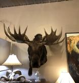 Fish Moose Mount 2