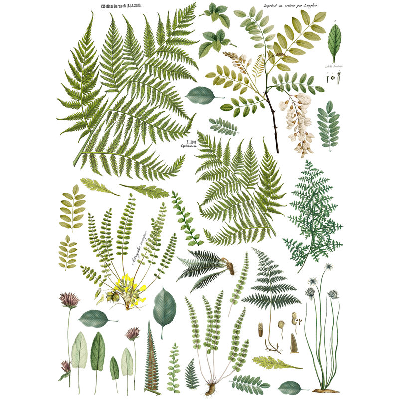 Iron Orchid Designs Fronds Botanical