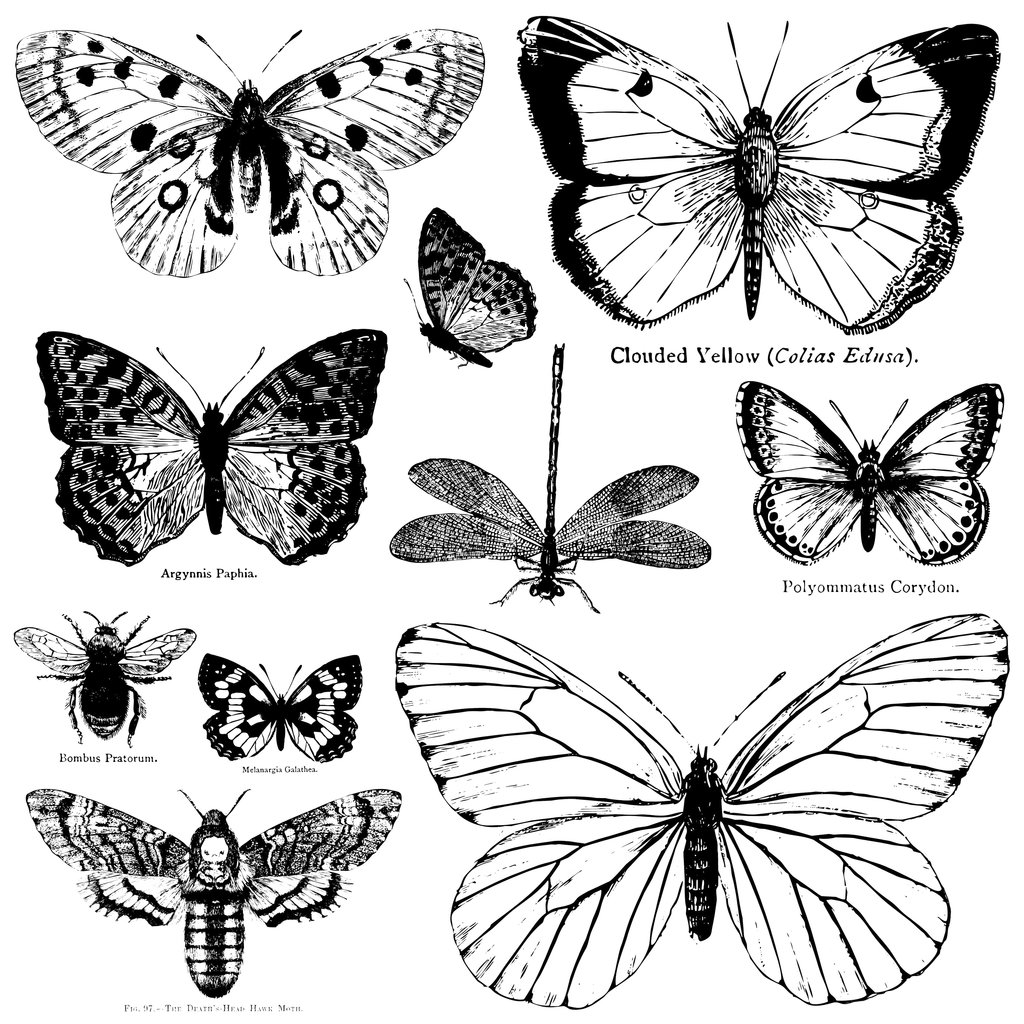 Iron Orchid Designs Butterflies