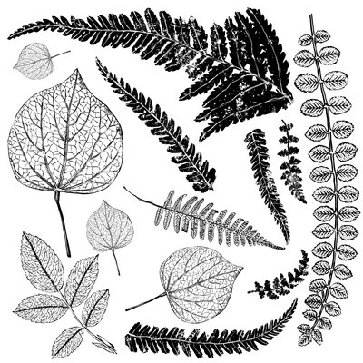 Iron Orchid Designs Fronds