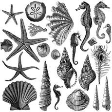 Iron Orchid Designs Seashore Decor Stamp