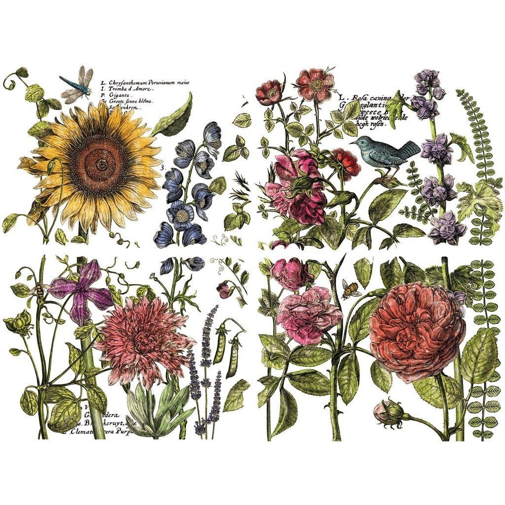 "Iron Orchid Designs Botanist Journal 12"" x 16"" Transfer Set"