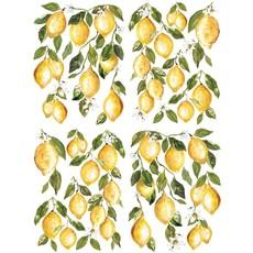"""Iron Orchid Designs Lemon Drops 12' x 16"""" Transfer Set"""