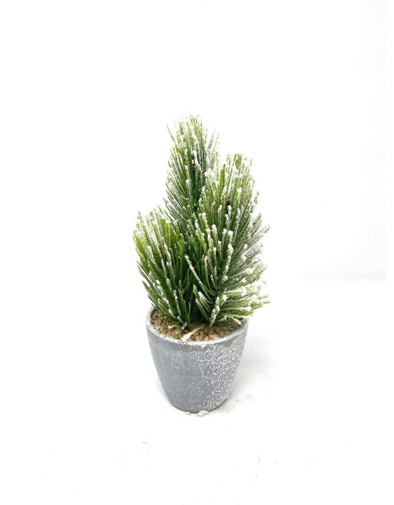 """10.5"""" Faux Snowed Pine in Pot"""
